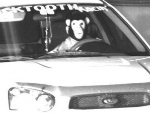 That Could Be Any Chimp In the Phoenix Area