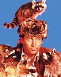 Raccoons on Crockett