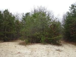 classic pinelands white sand ecosystem - Sapia 12.4.15