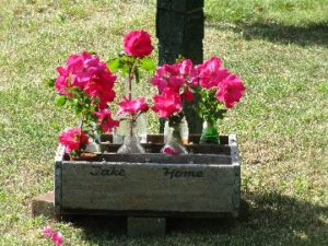 Sapia - wilting roses