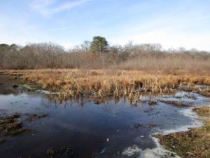 Sapia - Shekiro's Pond