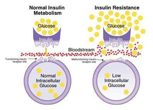 insulin-cells