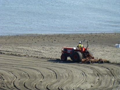 The clean up crew, not a great job and the odor is almost unbearable on the beach