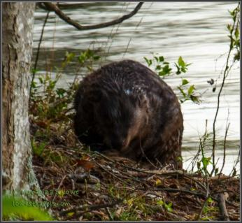 Steve was so excited to see a beaver!