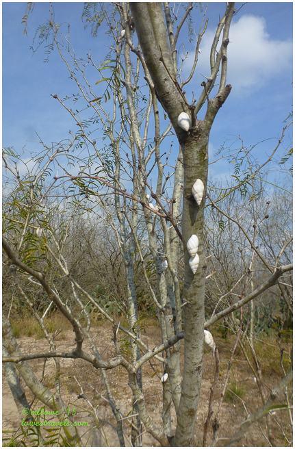 Tree snails