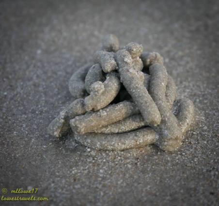 Lugworm poops