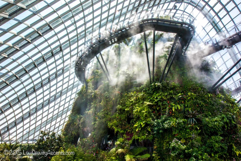 Cloud Forest Watering