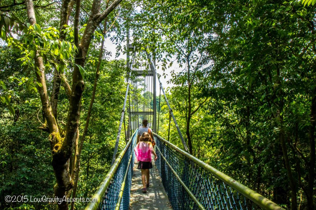 Singapore Treetop Walk