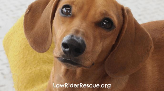 DIY Healthy Dog Treat