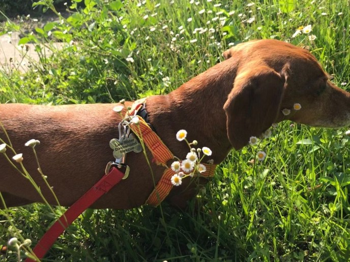Salome Doxie