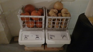 Pumpkins and butternut squash.