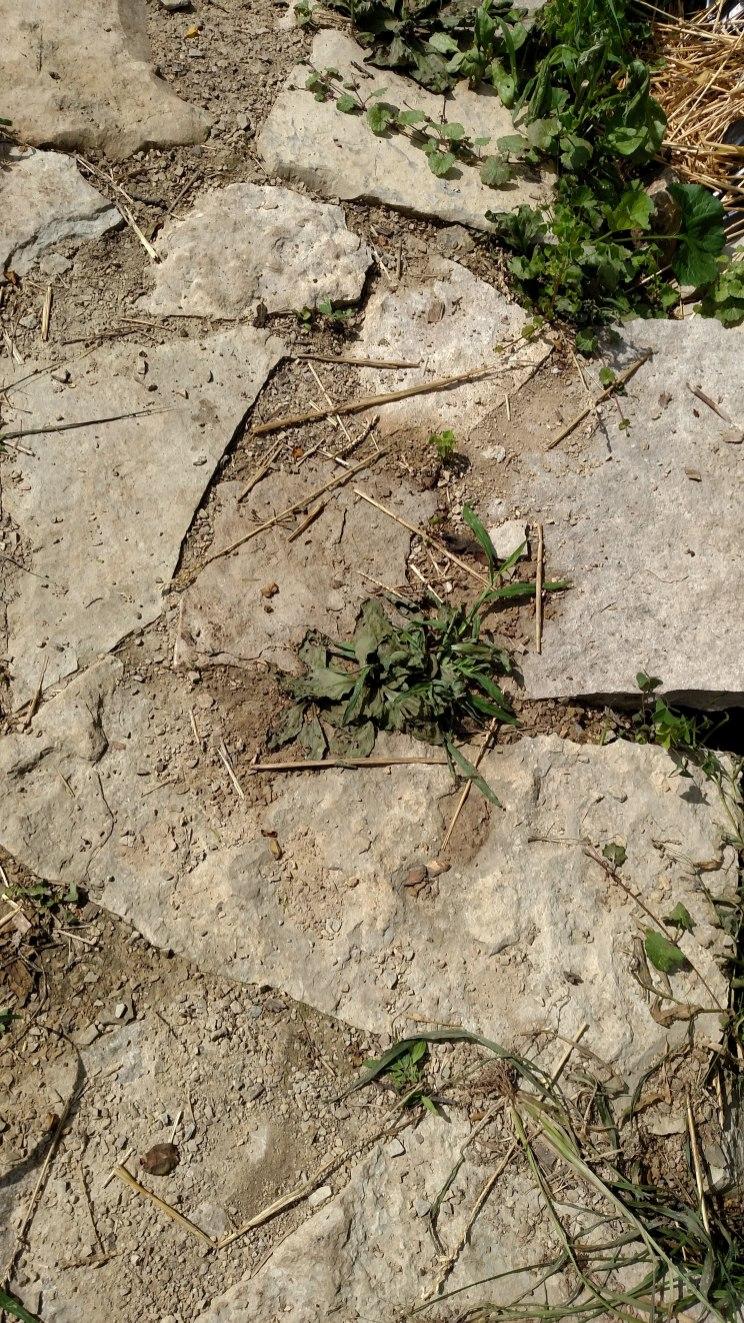 Dead weeds!