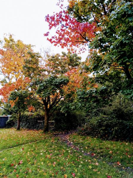 Andrew Bromelow's photo of autumn trees near Braithewaite Playground in Lowton, October 2020