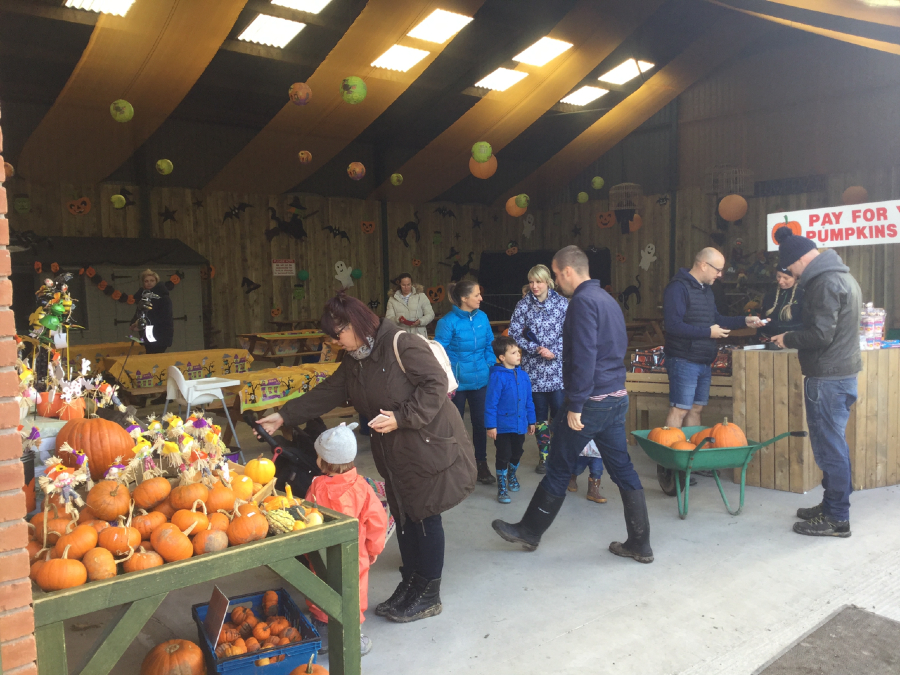 Shoppers browse the pumpkins at Grange Farm in Lowton