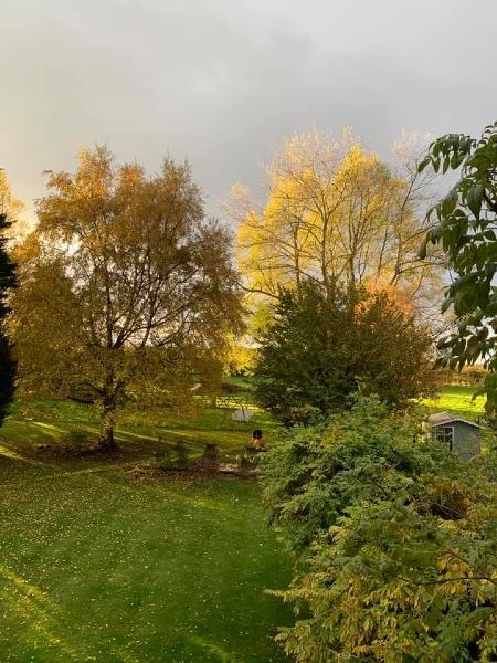 Stephanie Palin's photo of autumn in her Newton Road garden