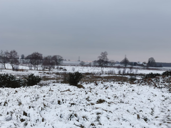 Lowton Moss in the snow, taken by Alex Sofield