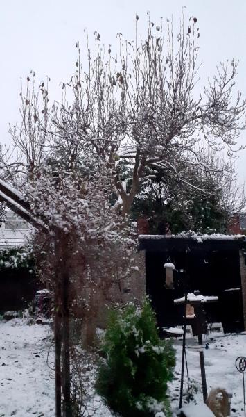 Veronica Vancalsteren's photo of her snowy back garden