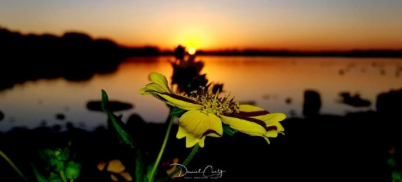 Daniel Carty Photography: Sunset over the spring flowers at Pennington Flash.