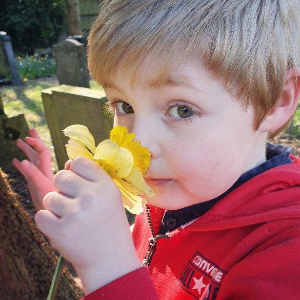 little boy smelling a daffodil