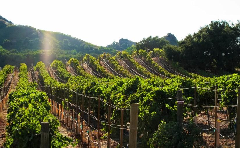 Tended: Malibu Wines