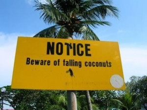 Singapore Beware of falling coconuts