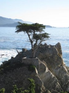 Pebble Beach Lone Cypress logo tree