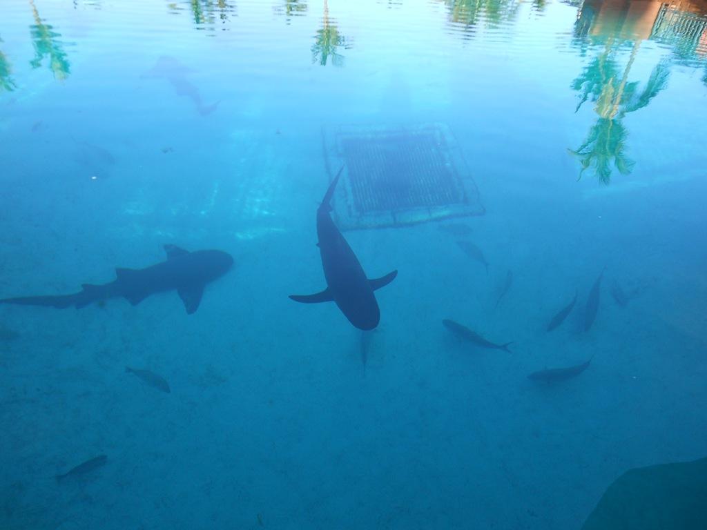 Atlantis Resort Aquaventure Water Park Bahamas