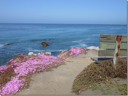 Pacific Grove iceplant 044