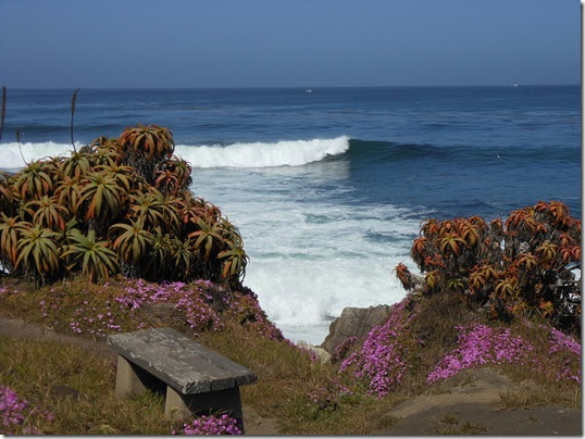 Pacific Grove iceplant 069
