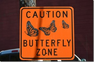 Butterfly-Zone_thumb.jpg