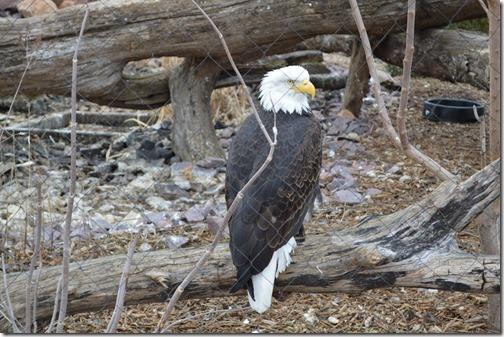 Eagle-1