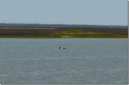 Cape Romain dolphin