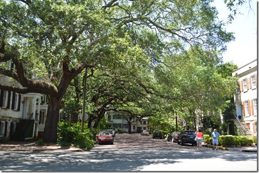 Savannah oaks canopy