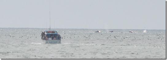 Sanctuary whales