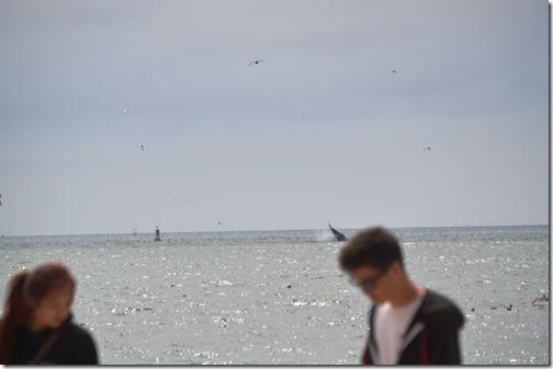 humpback-3