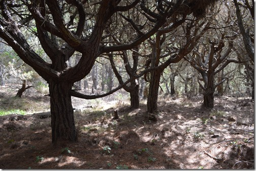 Del Monte Forest-3