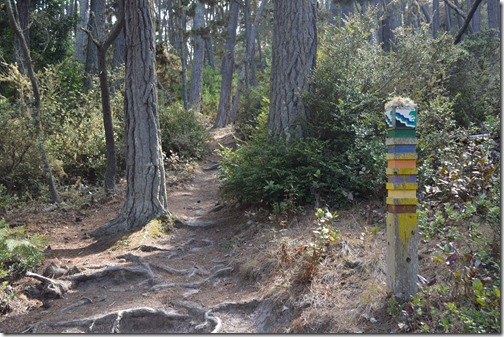 Del Monte Forest-4
