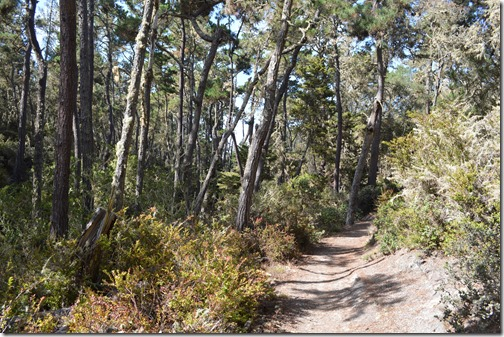 Del Monte Forest-5
