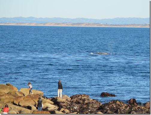 PG whale-1