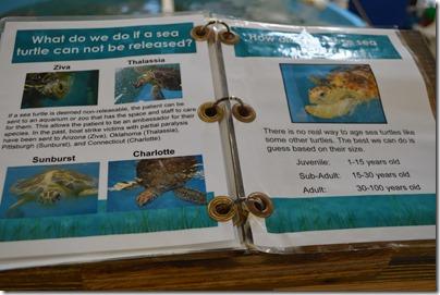 Sea Turtle age