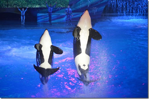 Incidents At Seaworld Parks: SeaWorld Orlando And Marine Mammal Intelligence On Cue