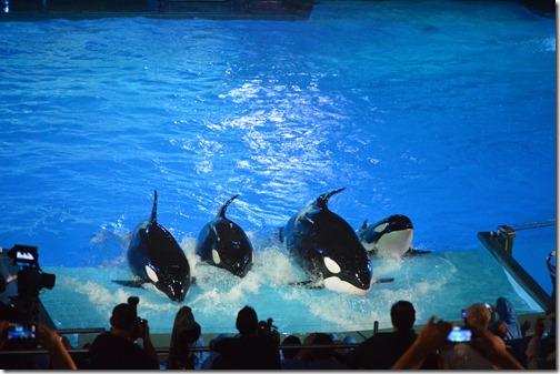SeaWorld orcas-3