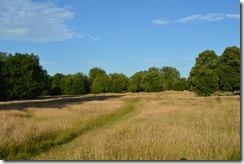 Hyde Park grass