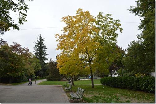 Geneva Fall