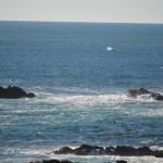 gray-whale-blow.jpg