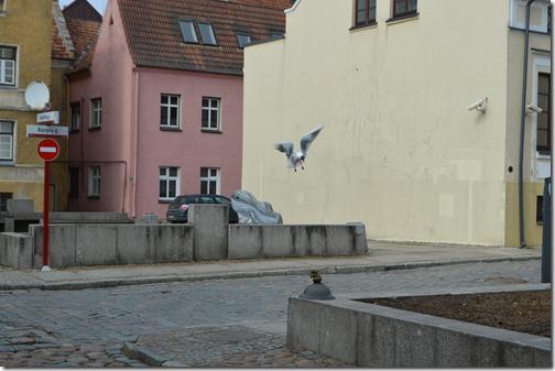 Klaipeda gull