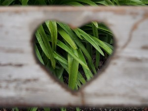 Blades of Grass in a Wooden Heart Cut Out Marriage or Something