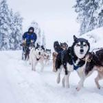 Туры на северный и южный полюс