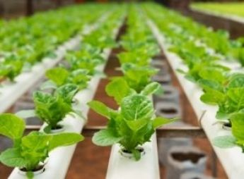 High-Tech Gadgets for a More Unique Garden