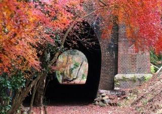 紅葉とトンネル